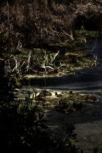 Black Alligator