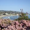 Laguna Beach flowers
