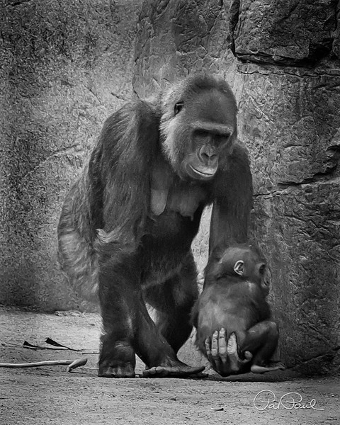 Mother and Child (San Diego Safari Park)