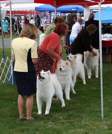 SCWS 2007 - Dogs