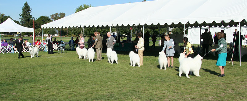 Saturday - Best of Breed - Dogs