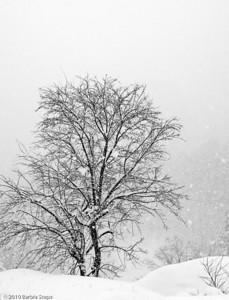 Snowbound   (Japan)