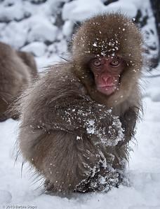 Monkey Suit    (Japan)
