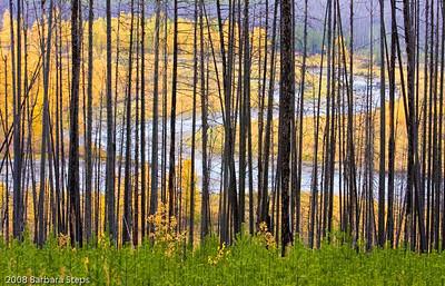 River of Light   (Glacier National Park, Montana)