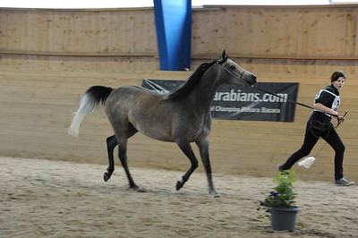 Mares 4-7 yrs