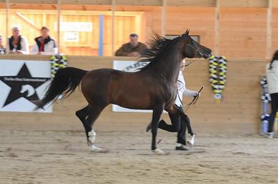 Stallions 8-11 yrs