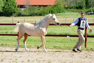 Turbo Star International 2011