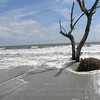 Beached tree 2