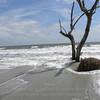 Beached tree 2