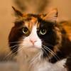 USH-Kitty-A058117-2