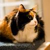 USH-Kitty-A058117-7