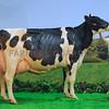 Agriscot Holstein champ