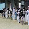 All Breeds All Britain Calf Show 2013, Stoneleigh Park, Warwickshire. <br /> Picture Tim Scrivener 07850 303986