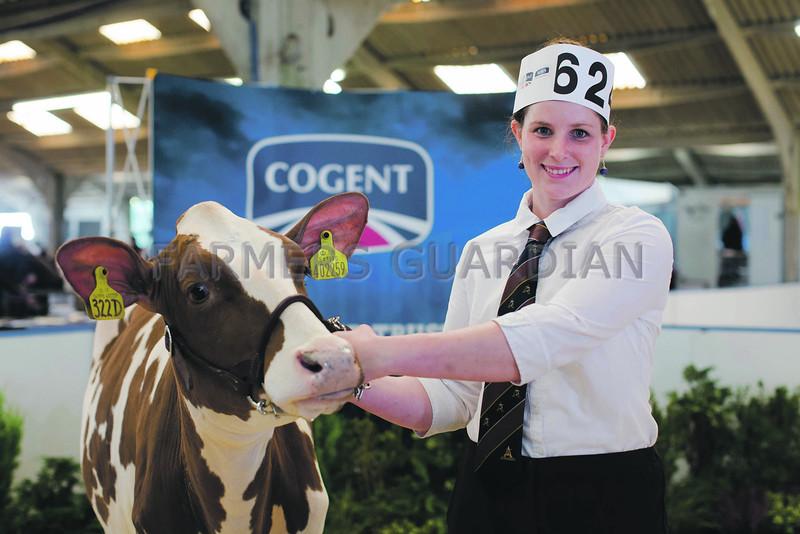 Ireland's Ann-Maree Manley was crowned champion Ayrshire showman. All Breeds All Britain Calf Show 2013, Stoneleigh Park,Warwickshire