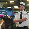 All Breeds All Britain Calf Show 2013, Stoneleigh Park, Warwickshire.<br /> Picture Tim Scrivener 07850 303986