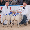 The reserve sheep champions,