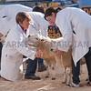 Agri-Expo011