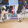 The British Blue champion, Solway View Horny from Kevin Watret of Annan, Dumfriesshire.