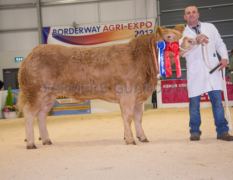 The reserve champion, Jade from Hefin Parry of Talwrn, L'Angefni, Anglesey.