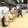 AgriExpo 10