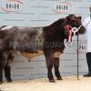 Agri BSH champ