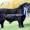 (Lloyd).  Welsh Black Reserve Native Interbreed Champion.
