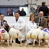Presentation to the Champion and Reserve Pairs of Butchers Lambs – l to r : Sarah Priestley (owner), Richard Saunders (Chief Exec. Royal Smithfield Club), Robert Carthe (owner) with Champion Lambs (Purebred Beltex), Carol Howells (owner), Chris Wright (judge) and Dafydd Lewis (owner) with Reserve Champion Lambs (Beltex Cross).