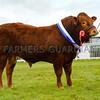 Junior Beef champion Haulfryn Morgan from Mr R.G. Whittley.