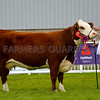 Hereford champion Fardre 1 Maple from Mr George Morgan.