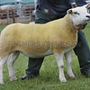 Angus Show 17 Texel Champion Gimmer from Bruce Keillor,West Ingliston, Forfar.