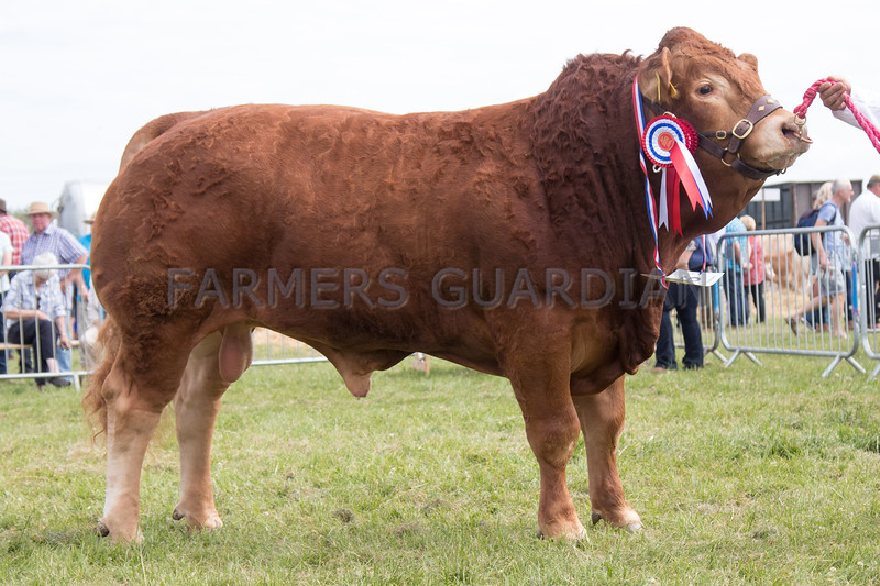 Ashby Show,Leicestershire 2017<br /> Limousine and Overall Champion Beaconsfield Minotaur owned by RP & DL Hutchinson Ltd<br /> Picture Tim Scrivener 07850 303986<br /> ….covering agriculture in the UK….