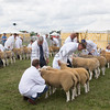 Ashby Show,Leicestershire 2017<br /> Picture Tim Scrivener 07850 303986<br /> ….covering agriculture in the UK….