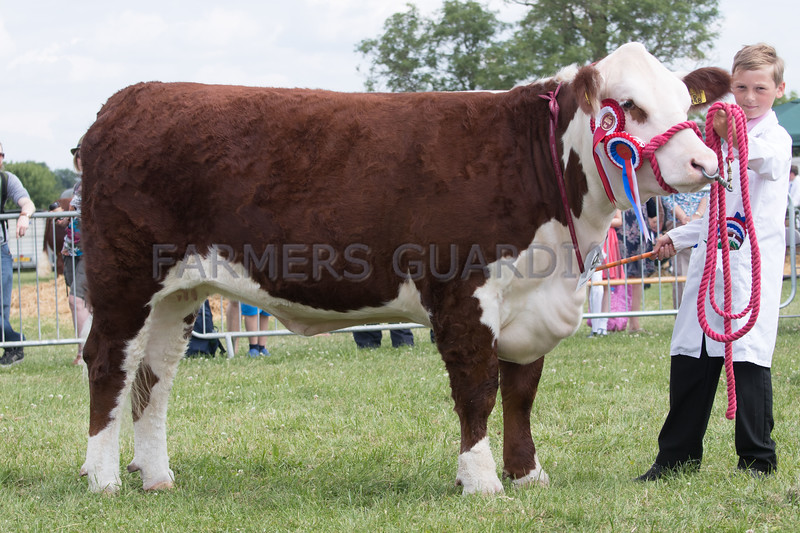 Ashby Show,Leicestershire 2017<br /> Normanton Griola owned by TD & WT Livesey <br /> Picture Tim Scrivener 07850 303986<br /> ….covering agriculture in the UK….