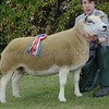 Texel and Interbreed Champion at Black Isle Show a Gimmer from Laura Green, Corskie Farm, Garmouth, Fochabers.
