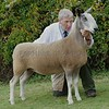 Bluefaced Leicester Champion at Black Isle Show a Gimmer from Robert Neill, Broadleys, Dunning, Perth.