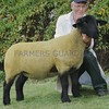 Suffolk Champion at Black Isle Show a Gimmer from Keith Ingram, Grange , Keith.