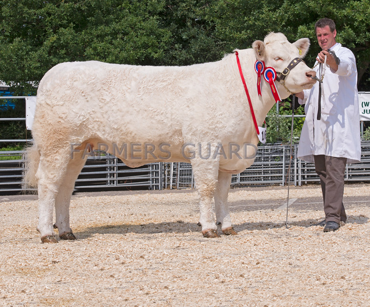 The interbreed beef champion, Alymar Galetea from Armstrong and Partners of Milton Keynes.