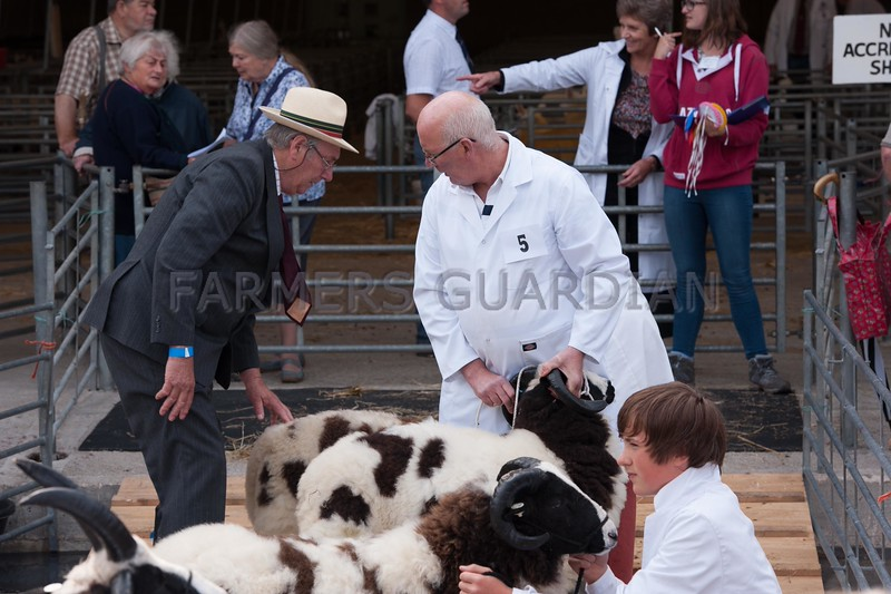 Sheep judging at Bakewell Show 2013