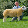 The reserve interbreed champion, a Texel ewe from F. Rushton of Matlock, Derbyshire.