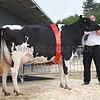 Bakewell Holstein