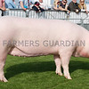 Glenmarshal Dainty Lady owned by Trevor Shields, Kilkeel, was the Supreme Interbreed Pig Champion at Balmoral Show.. Photograph: Columba O'Hare