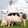 Brian Kelly, Lurgan with Princess Freda,  his Reserve Supreme Interbreed Pig Champion at Balmoral Show. The Gloucestershire Old Spot was also the Rare Breed Champion. Photograph: Columba O'Hare