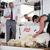 Jack Robinson finishes off his 12th sheep, at the NAtional Sheep Shearing Championship Final. Jack was the 2016 winner of the Zoetis/ RUAS National Sheep Shearing Championship at Balmoral Show. Photograph: Columba O'Hare