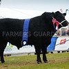 Carlhurlie Epic from James Porter, Dromore, Co. Down, a three-year-old Aberdeen Angus bull.