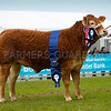 Trueman Lute took the inter-breed beef champion at the Balmoral Show, a Limousin heifer from Henry and Savage and sons, Cullyhanna, Co. Down.