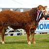 Junior interbreed beef champion - Limousin bull, Trueman Mozart, from Henry Savage and sons.