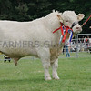 "Charolais  Champion at Banchory Show ""Utopia Lionhart"" from E J Kingaby, Mains of Auchmedden, Pennan, Fraserburgh."