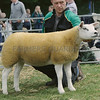 Texel Championa at Banchory Show from W&M Hunter, West Cairnhill, Culsalmond, Insch.