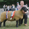 Suffolk and Sheep Interbreed Champion at Banchory Show a Gimmer from Mrs J A Lorimer, Cadgerford, Kingswells, Aberdeen.