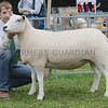Any Other Native Breed champion a Lleyn